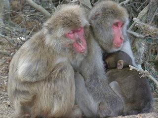 Monkey_Park_in_Arashiyama,_Kyoto.jpg