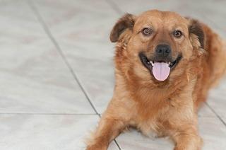 puppy-112855_640.jpg