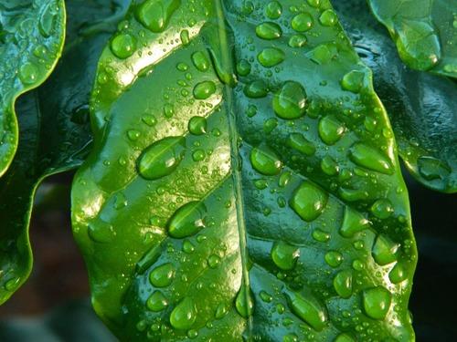 leaf-654121_1920.jpg